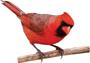 birdie_consulting