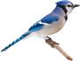 birdie_media