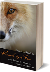 Kissed by a Fox by author Priscilla Stuckey