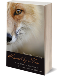 Book image Kissed by a Fox - a book to inspire deeper connection with nature