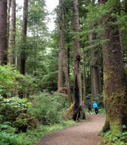 Trail with a few hikers among immense fir trees suggests awe is part of nature's healing power.