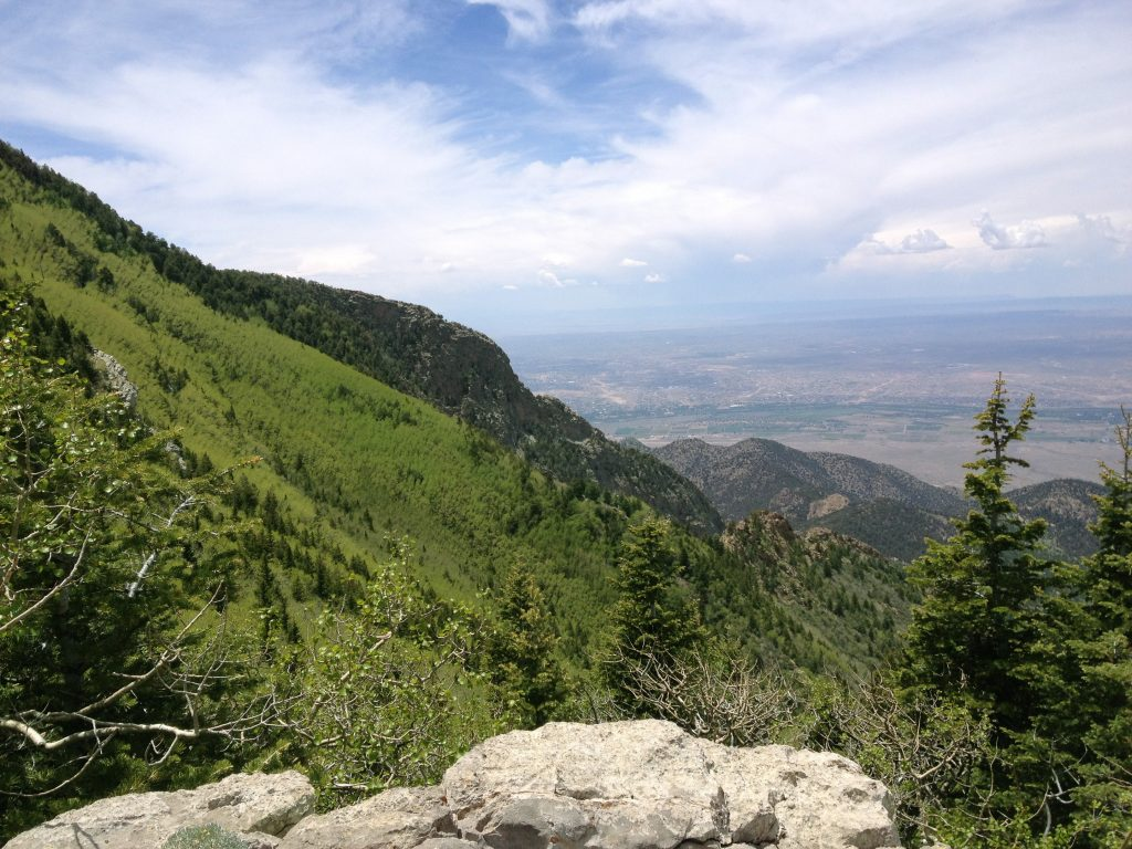 View overlooking Albuquerque from 5000 feet above, with a wall of aspens to the left