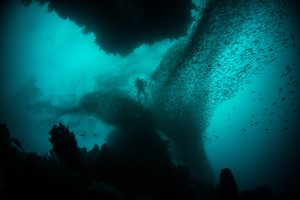 A small diver barely visible far away through an enormous school of small fish like black clouds in a deep turquoise ocean