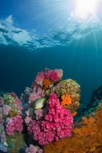 Bright orange and pink corals under a deep blue sea
