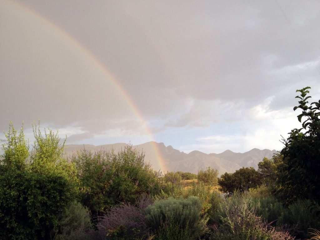 Large gray sky, shimmering Sandia mountains in the distance, garden up close, rainbow shining over all