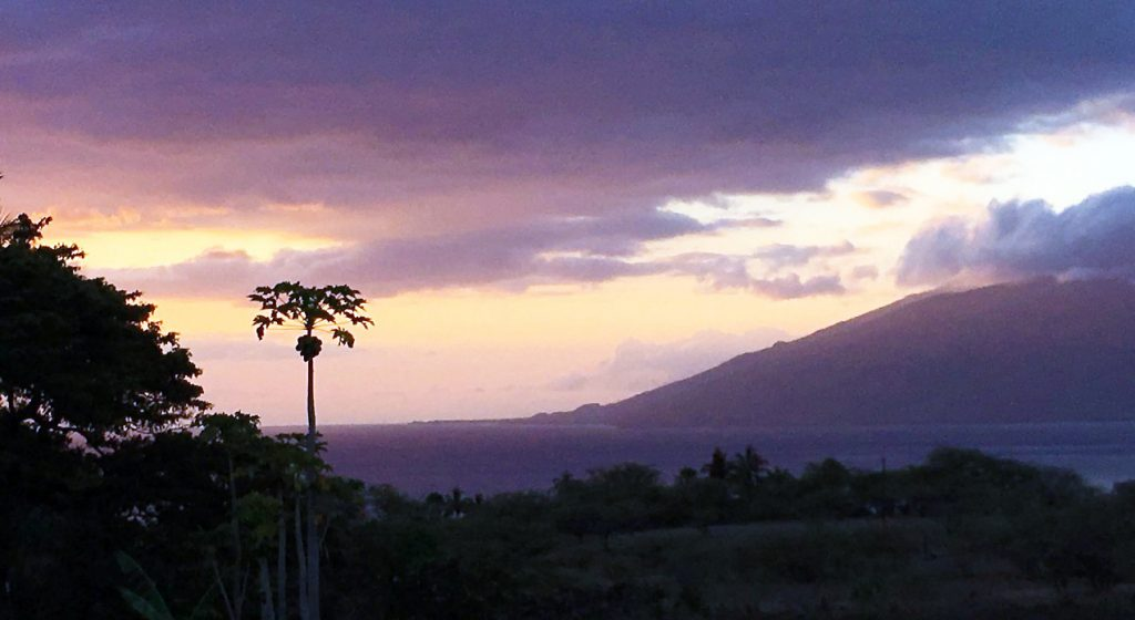 Purple and orange-yellow clouds over a dark violet sea with a spindly papaya tree silhouetted in foreground